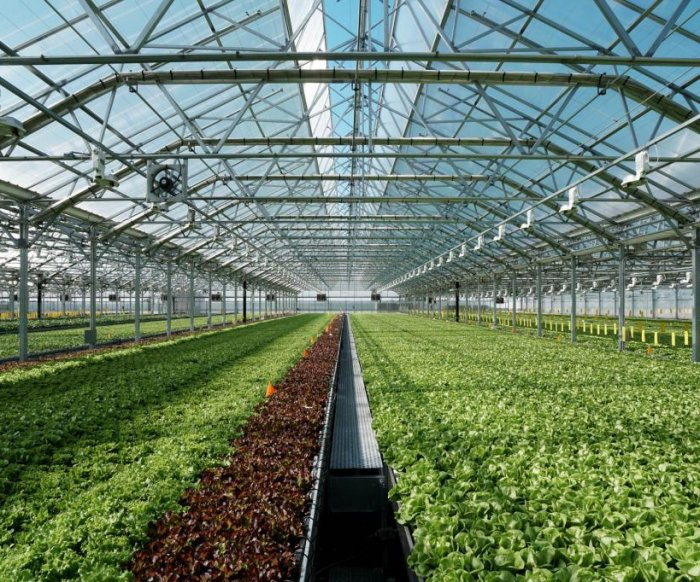 Indoor farming firm turns pandemic disruption into opportunity