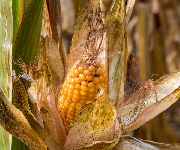Survey: GMO food critics overestimate their knowledge of the subject