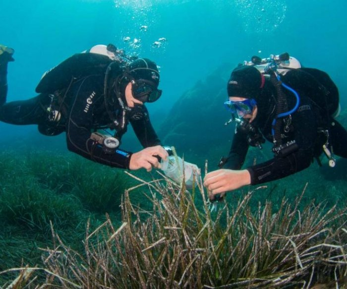 Novel marine bacteria could yield new antibiotics