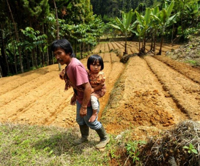 To improve children's diets, conserve forests