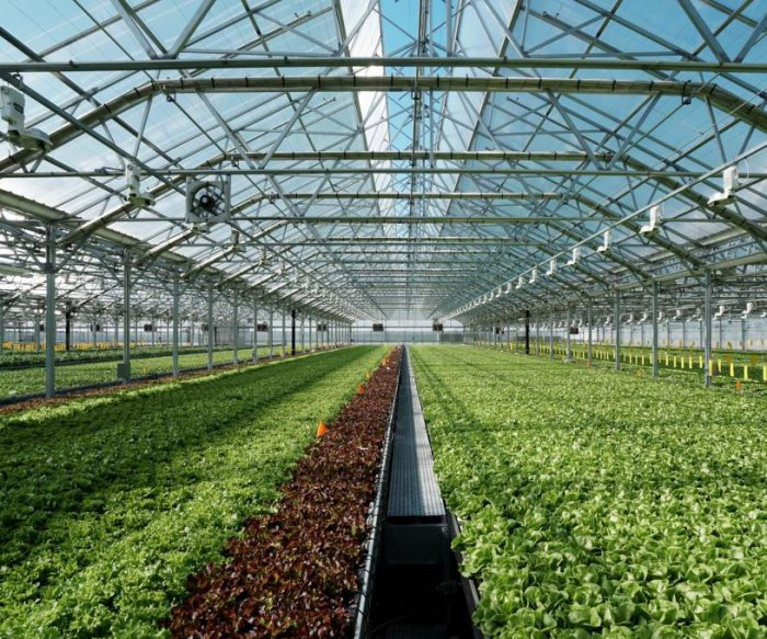 Florida indoor farming firm turns pandemic disruption into opportunity