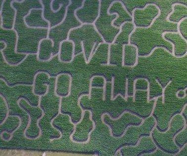 Michigan farm's 12-acre corn maze spells out 'COVID GO AWAY'