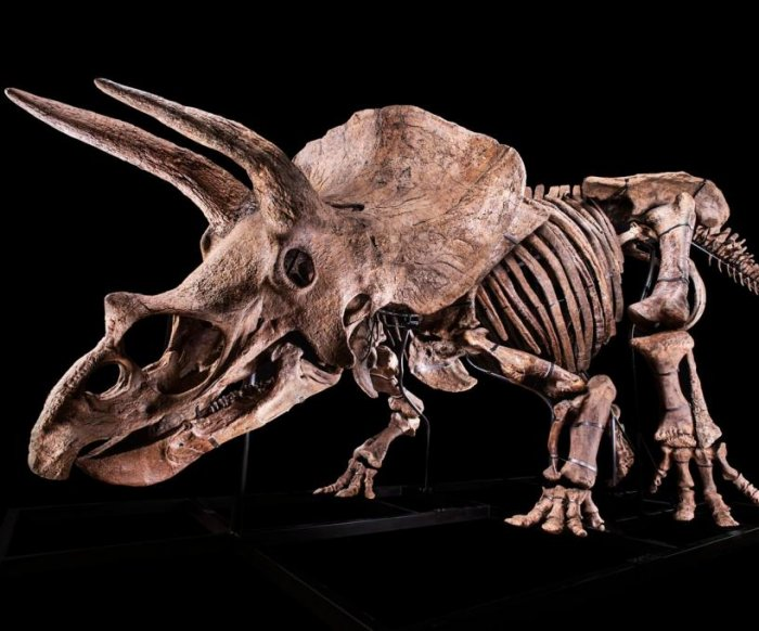 Largest triceratops ever found expected to sell for almost $2 million
