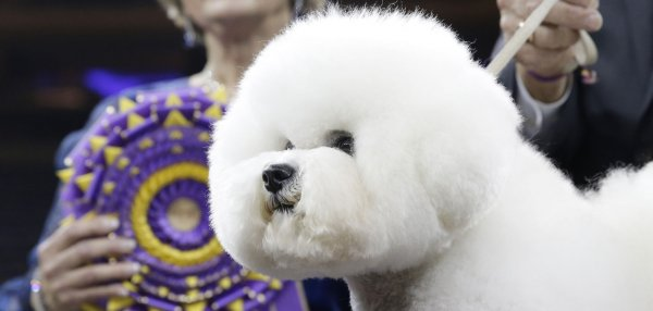 Highlights from the Westminster dog show