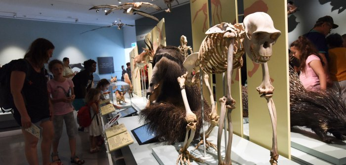 Preview: Israel's Steinhardt Museum of Natural History