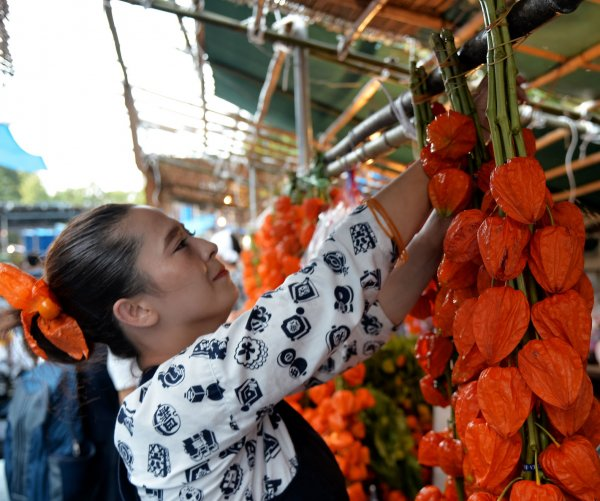 Highlights of Japan's 'Hozuki Ichi' Ground Cherry Fair