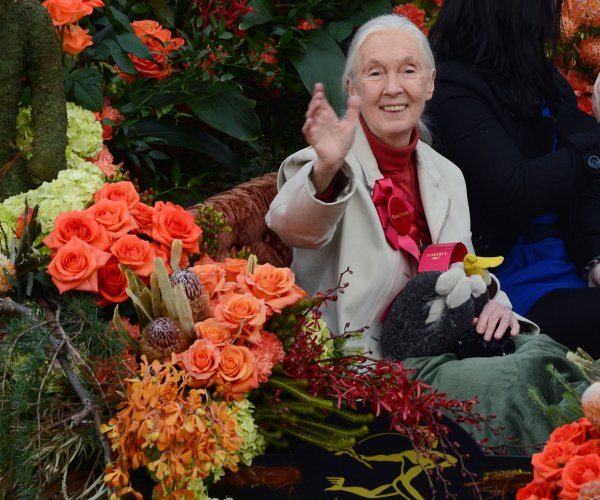 Jane Goodall: 'We all have role to play' in saving planet Earth