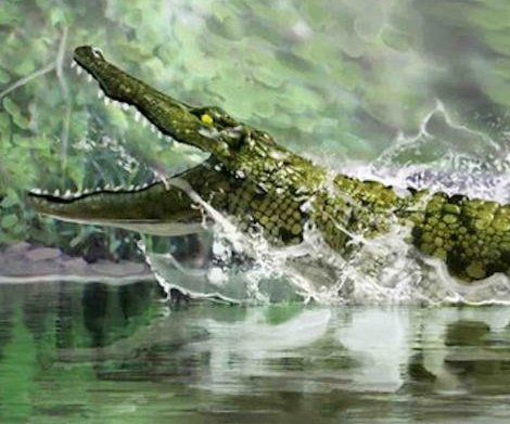 Fossils confirm Spanish caiman-like reptile 16 million years ago