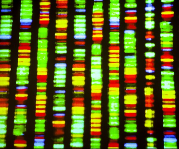 Duplications of noncoding DNA could help explain human-primate split