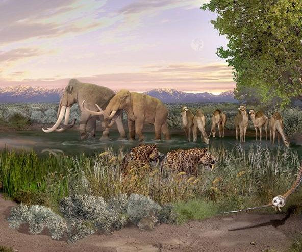 Humans have shrunk the planet's mammals