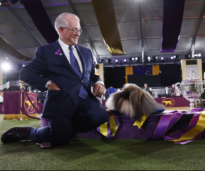 Wasabi the Pekingese wins the Westminster Dog Show
