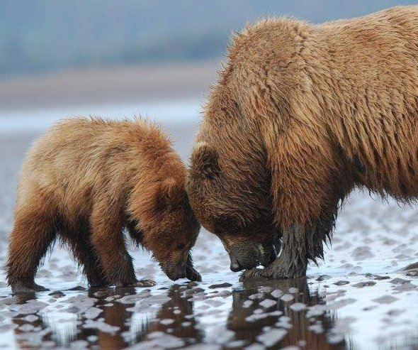 10 adorable animals of the national parks