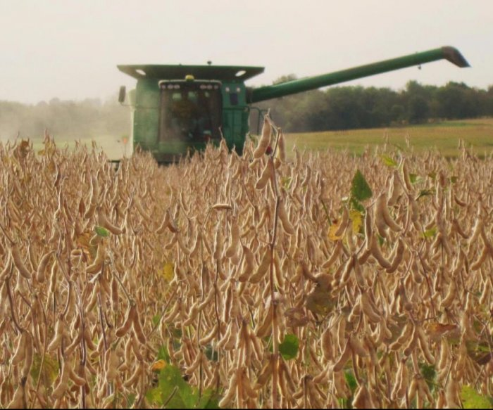 Trade war means much of America's soybean harvest will go unsold