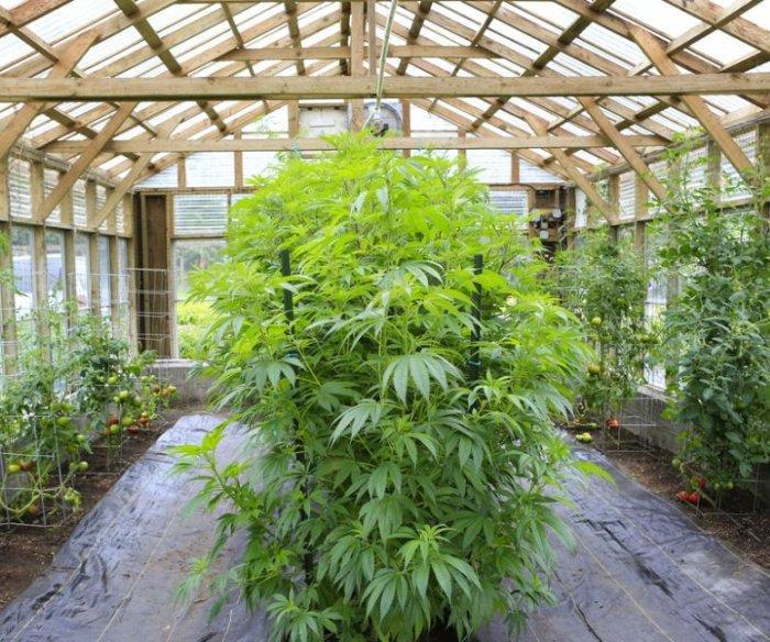 Marijuana, hemp businesses bolster commercial real estate