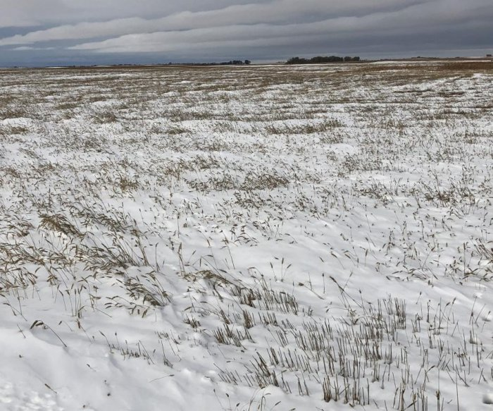 Farmers fight through snow, freezing weather to harvest crops