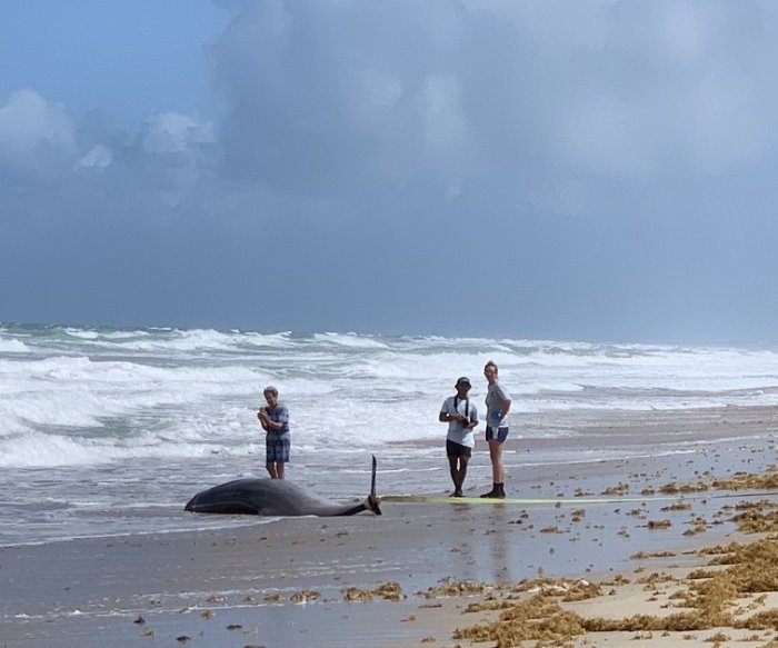 High levels of mercury, plastic toxins found in stranded whales, dolphins