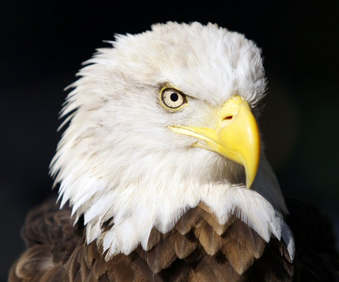 Democrats introduce bill to reverse rollbacks of Endangered Species Act