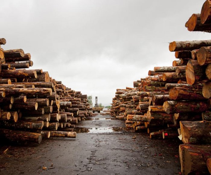 U.S. hardwood industry disintegrates from trade war with China