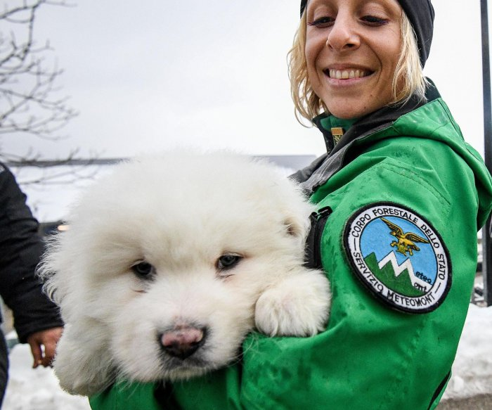 Rescue of 3 puppies gives hope for survivors in Italy avalanche