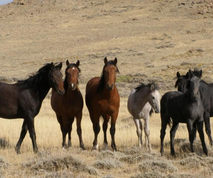 New rules for managing wild horses, burros on horizon