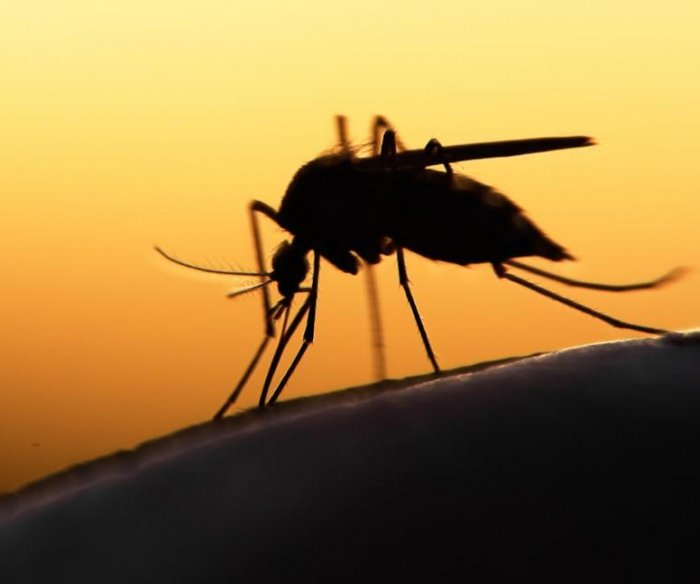 Zika vaccine shows promise against brain cancer