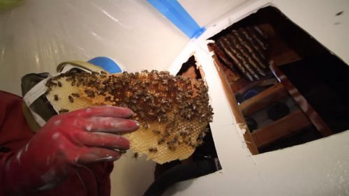 Los Angeles man chronicles removal of 50,000 bees
