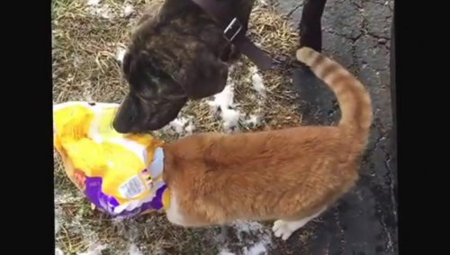 Dog-comes-to-the-rescue-of-cat-with-pizza-rolls-bag-stuck-on-its-head