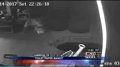 Watch: 'Toilet Paper Bandit