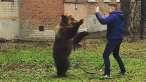 Russian-police-probe-viral-video-of-man-walking-bear-on-a-leash