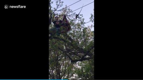 Softball-players-rescue-iguana-from-Minnesota-tree
