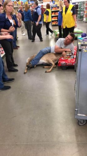 Shopper-wrestles-deer-that-wandered-into-Minnesota-Walmart