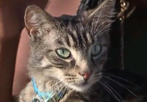California-cat,-found-1,500-miles-away-from-home,-reunited-with-owner