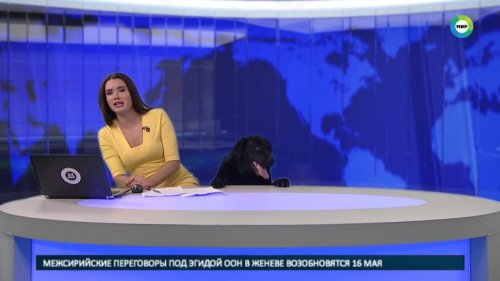 Watch: Russian news anchor interrupted by boisterous black lab