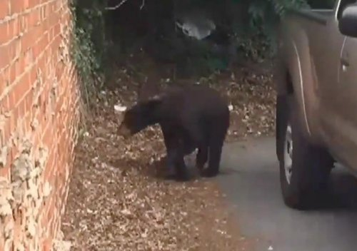 Bear camped out in tree behind North Carolina liquor store