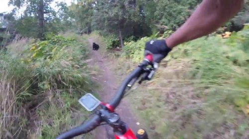 Mountain-biker-encounters-bear-sitting-in-the-middle-of-trail