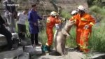 Permalink to Firefighters climb into sewer to rescue trapped pig