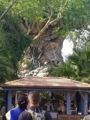 Four-men-busted-trying-to-climb-Disney-World's-Tree-of-Life