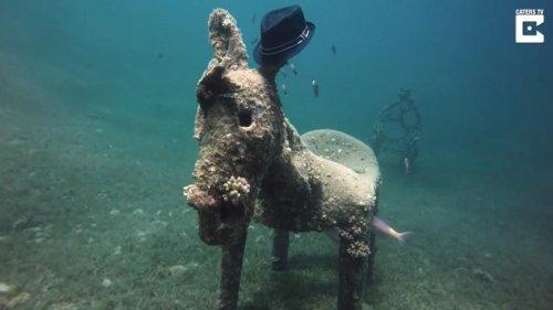 Scuba-diver-discovers-bizarre-donkey-statue-in-Red-Sea