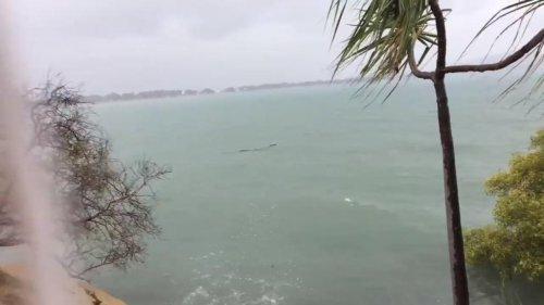 Watch: Crocodile takes a dip in popular swimming spot