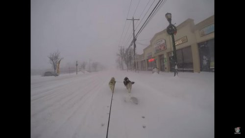 Dog's-pull-man-on-bicycle-through-city-streets-during-snowstorm