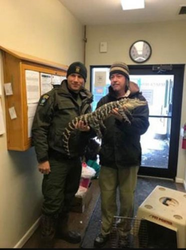 Authorities-seize-illegal-alligator-after-Facebook-post