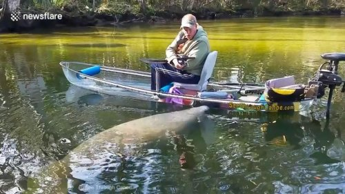 Tourist's-canoe-pushed-through-water-by-curious-manatee
