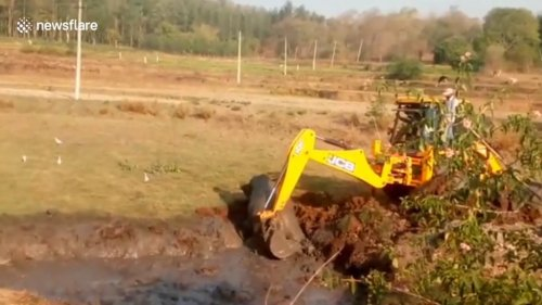 Excavator-used-to-free-baby-elephant-from-swamp