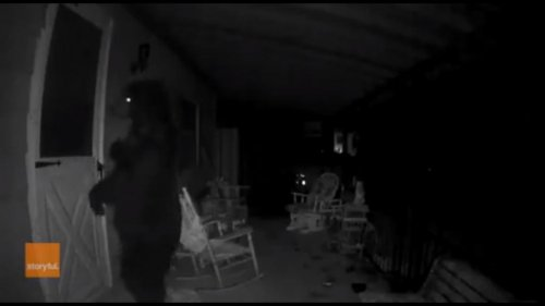 Bear-strolls-up-to-Pennsylvania-home,-knocks-on-door