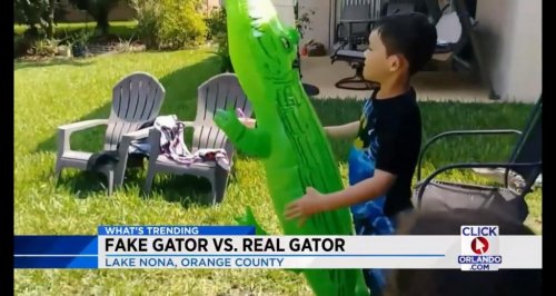 Florida-boy-playing-with-inflatable-alligator-joined-by-real-gator