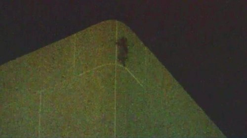 Raccoon-climbs-25-story-Minnesota-building,-goes-viral