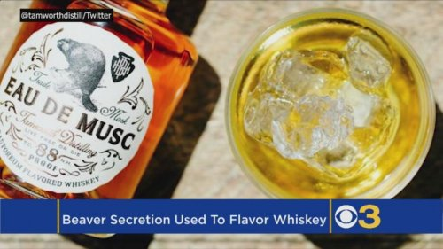New-Hampshire-distillery's-bourbon-flavored-with-beaver-secretions