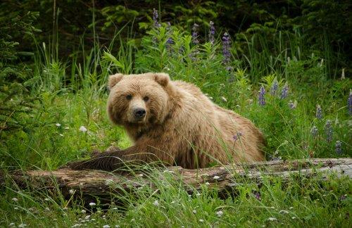 Grizzly kills cyclist on Montana trail