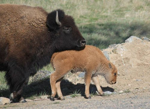 Environmental-group-protests-Zinke's-staff-cuts-at-wildlife-center