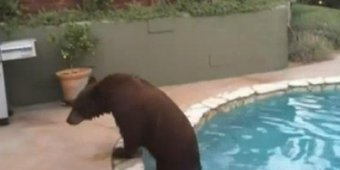 Video: Bear cools off in California pool